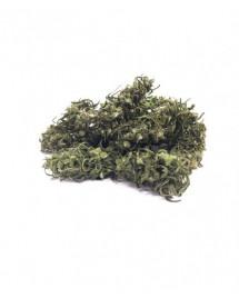 Suszone kwiaty konopi CBD 20G - Carmagnola Selezionata - limitowana edycja