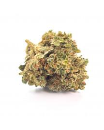 Susz konopny CBD Lemon Haze 1g