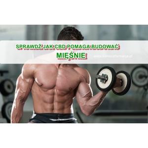Jak budować mięśnie z CBD i olejem MTC
